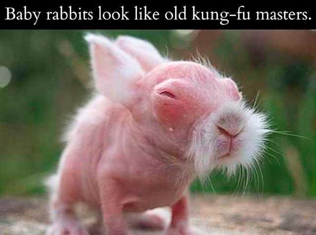 baby-rabbit-kung-fu-master